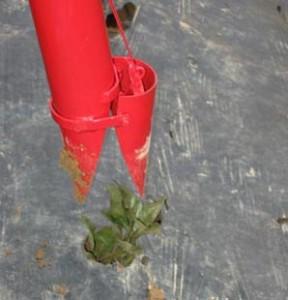 сажалка рассады помидор