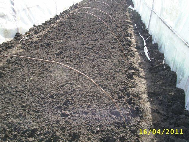 Парник для рассады капусты