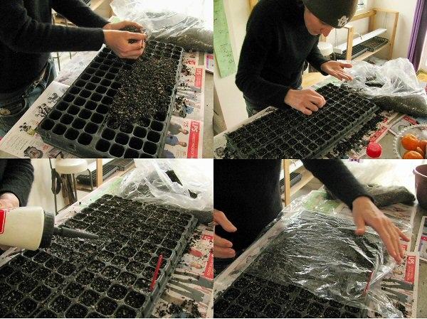 Газания посев семян